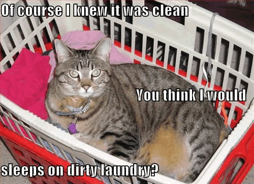 Funny Cat Quotes Clean Www Imgkid Com The Image Kid